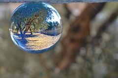 olive tree (Love me tender ♪¸.•*´¨´¨*•.♪¸.•*´) Tags: olivetree tree olive nature lensballs bokeh blur landscape neamakri greece dimitrakirgiannaki ball shape round flickr