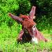 Free donkey