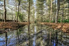 小葉欖仁森林 倒影 ~ Reflection (Estrella Chuang 心星) Tags: reflection water 小葉欖仁森林 倒影 彰化 田尾 心星 estrella