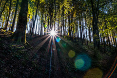 Be the light that helps others see (Gullivers adventures) Tags: lightrays forest trees beautiful walks treks adventure alwaysadventure findthelight ireland autumn love spirit thetreeshaveeyes wonderful happiness nature explore connected