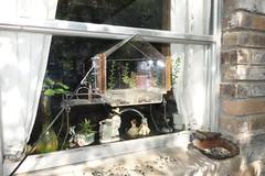 20190728_1524_109_Electrified-Bird-Feeder (EasyAim) Tags: birdfeeder electrical electrified fence squirrel proof colleyville