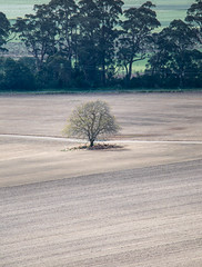 Tree in a ploughed field Orbost Victoria (laurie.g.w) Tags: tree field agriculture farming rural land landscape rurallandscape eastgippsland victoria australia snowyriver floodplain eosm m3 mirrorless