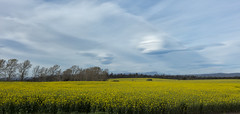 Frontiers (Keith Midson) Tags: clouds sky lenticular canola field agriculture canon 5dsr tasmania australia