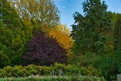Herbst (Harry_Pl) Tags: gärten der welt berlin marzahn deutschland germany herbst baum wolken himmel