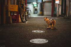 猫 (fumi*23) Tags: ilce7rm3 sony sel55f18z 55mm sonnartfe55mmf18za a7r3 animal alley cat chat gato neko ねこ 猫 ソニー