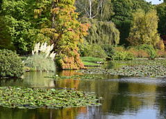 Sheffield Park - East Sussex (MJ Harbey) Tags: trees reflections lake water sheffieldparkandgardens nationaltrust sheffieldpark uckfield eastsussex nikon d3300 nikond3300