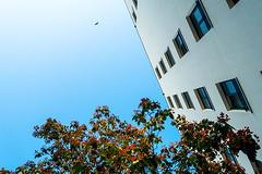 20190917-048 (sulamith.sallmann) Tags: architektur tiere bauwerk berlin brunnenviertel deutschland europa froschperspektive gebäude gesundbrunnen gleimstrase haus mitte perspektive tier vogel wedding wohnen wohnhaus sulamithsallmann