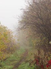 a path (Darek Drapala) Tags: misty mist panasonic poland polska panasonicg5 plants path autumn fogg nature mystery mystic lumix light