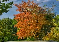 Herbstfarben (Harry_Pl) Tags: gärten der welt berlin marzahn deutschland germany herbst baum himmel wolken