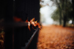 In the fall, I believe again in poetry (ewitsoe) Tags: autumn city cityscape nikon nikond750 street viking warszawa erikwitsoe poland urban warsaw fence leaf leaves stuck path park walkway bokeh alone quiet fallcolors golden mood atmosphere cold chill