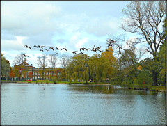 Geese In Flight .. (** Janets Photos **) Tags: uk hull eastyorkshire eastparkhull geese nature publicparks lakes