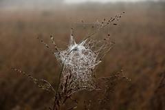 Decorazioni (lincerosso) Tags: ragni spiders tele decorazioni operedartedellanatura autunni nebbia bellezza armonia
