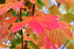 DSC_3805 (griecocathy) Tags: macro feuille arbre tiges rose saumoné vert jaune brun rouge