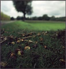 Herbstfrüchte (Ulla M.) Tags: mittelformat 6x6 analog canoscan8800f kastanien chestnuts umphotoart seagull4bi freihand dof expiredfilm tlr rainydays analogue film analogphotography filmphotography filmshooter ishootfilm filmisnotdead herbst autumn