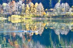 Riflessi d'autunno (arno18☮) Tags: arno18 riflessi valon france chevrerie lac laghetto montagnes nature eau bleu oie sauvages jaune vert orange arbres automne lumière special reflets