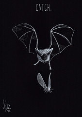 inktober 30: Catch. (Klaas van den Burg) Tags: bat moth whiteink crown pen dippen