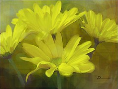 A bit of Yellow (novice09) Tags: flowers painterly