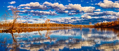 Nature is Surreal (Bombatron) Tags: water reflections dusk golden hour lake little rock flickr explore canon 6d 50mm 12l panorama pano trees whithered gold withered