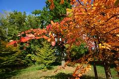 This is autumn (Tobi_2008) Tags: herbst autumn bäume trees blätter leaves sachsen saxony deutschland germany allemagne germania