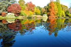Autumn Reflections NT (Adam Swaine) Tags: sheffieldpark naturelovers nature nationaltrust sussex sussexgardens autumn autumncolours autumnviews beautiful lakes waterside trees england english britain british uk ukcounties counties countryside reflections adamswaine 2019 colours