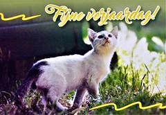 Greeting card (Steenvoorde Leen - 16.1 ml views) Tags: ansichtkaart briefkaart card postcard kart postkarte cardar postal tarjeta carta korespodenzkarte correspodenzkarte brefort cartolina listek korespodencni old postcards geschiedenis historie history pussy puss poes chat mieze katze gato gata gatto kat kater greetingcard fijneverjaardag