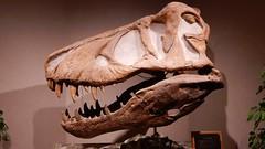Dickinson Museums T-Rex Skull (Haikiba) Tags: dickinson northdakota badlandsdinosaurmuseum tyrannosaurusrex trex skull