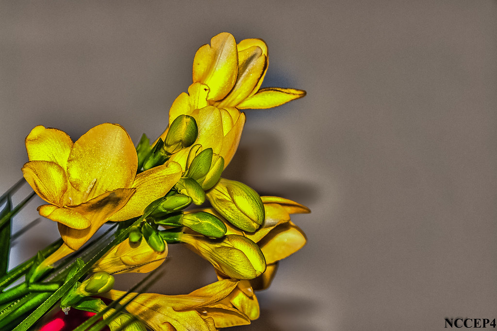 Fiori Gialli Yellow Flowers.The World S Best Photos Of Fiori And Gialli Flickr Hive Mind