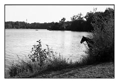 (bakmak71) Tags: agfaapx100 minoltax300 summer opfingersee analog swfilm scanvomnegativ adonal pferd horse freiburg