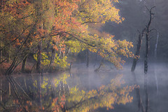 Delamere Forest - The Dead Lake (JamesPicture) Tags: autumn cheshire deadlake delamereforest woodland