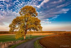 Lumière automnale (Pascale_seg) Tags: lorraine moselle france grandest paysage landscape countryside countryscape automne autumn autunno route campagne nikon