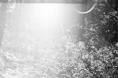 Brightness (rATRIJS) Tags: bw canon model 7 200 ilford fomapan lc29 fomapan200 ilfotec reflecta canonmodel7 film analog 35mm 50mm rangefinder latvia jupiter8 proscan 10t reflectaproscan10t