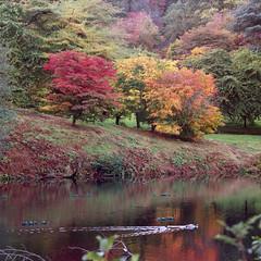 (Andrew :-)) Tags: bronicasqa zenzanons150mm35 kodakportra400 winkwortharboretum autumn