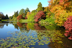 Sheffield Park and Garden (Adam Swaine) Tags: adamswaine sheffieldpark trees autumn autumncolours autumnviews beautiful sussex sussexgardens lakes england english waterside water lake naturelovers nature nationaltrust uk ukcounties reflections 2019 counties countryside gardens leaves fourseasons eastsussex
