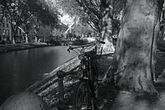 autumn light@Kö-Graben, Düsseldorf (Amselchen) Tags: canon bnw blackandwhite shadow light bridge water trees bicycle mono monochrome germany season ef40mmf28stm pancake autumn bokeh blur dof depthoffield canoneos6dmarkii