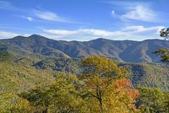 Blue Skies (mevans4272) Tags: mountains sky autumn trees nc