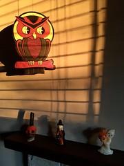 Childhood Halloween Memories (jchants) Tags: 119in2019 89sentimental owl ghost skull witch shadows sunshine halloween halloweendecorations