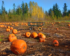 """""""There are three things I've learned never to discuss with people: religion, politics, and the Great Pumpkin."""" . . . Linus (dragonflydreams88) Tags: ©dragonflydreams88 pumpkinpatch pumpkins wagon trees autumn halloween shamrockfarm"""