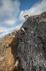 D (dog) E9 ... no chalk (JJFET) Tags: dog rock climbing littledoglaughedstories border collie sheepdog