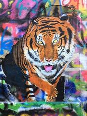 Willem Boey / Werregarenstraatje - 28 okt 2019 (Ferdinand 'Ferre' Feys) Tags: gent ghent gand belgium belgique belgië streetart artdelarue graffitiart graffiti graff urbanart urbanarte arteurbano ferdinandfeys