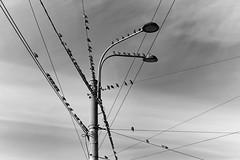 F016142_02 (fotoliber) Tags: santpetersburg rússia