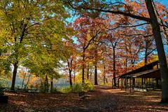 Picnic Anyone? (amillionwalks) Tags: fall autumn 2019 october birthday colours picnic mohawk park leaves morning foliage trees