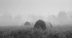 Fall fog, processed in BW (Peeb OK) Tags: fall fog hay landscape nikon z6 acros film black white mono