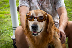 Cool Dog (Eden Alon) Tags: animal dogs dog cute golden retriever rebelt6