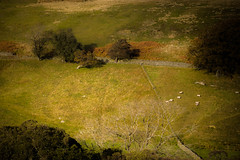 Bollihope (tonguedevil) Tags: landscape view outdoor outside countryside autumn nature hillside fields trees sheep afternoon green colour light shadows sunlight