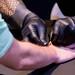 Biohax NFC Chip wird unter die Haut transplantiert auf der Digital X in Köln