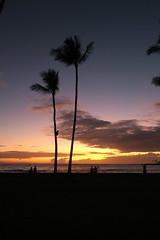 Palms at sunset (BarryFackler) Tags: sunset sundown evening konainnrestaurant konainnshoppingcenter konainn kailuakona kailuabay clouds sky ocean sea pacificocean palms palmtrees nature beautiful hawaii hawaiiisland hawaiicounty hawaiianislands polynesia sandwichislands island tropical outdoor 2019 barryfackler barronfackler