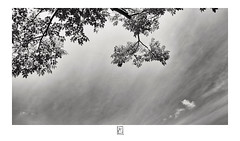 Branches and sky (krishartsphotography) Tags: krishnansrinivasan krishnan srinivasan krish arts photography fineart fine art sky branches clouds leaves nature affinity photo silver efex pro dxo canon fort thirumayam tamilnadu india