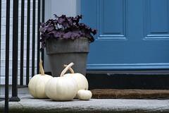 Four (Mike J Maguire) Tags: washingtondc pumpkins gourds halloween halloweendecorations asahitakumar85mmf19