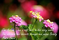 Η Φύση -The Nature - Die Natur (ᗰᗩᖇᓰᗩ ☼ Xᕮ∩〇Ụ) Tags: colors farben bokeh greece october sunlight sonnenlicht griechenland natur nature beauty schönheit canoneos1100d ourplanet ελλάδα φύση χρώματα οκτώβριοσ physis