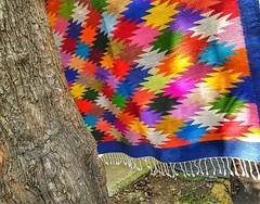 Árbol con sarape (FOTOS PARA PASAR EL RATO) Tags: árbol sarape colores tejidos artesanía cdmx